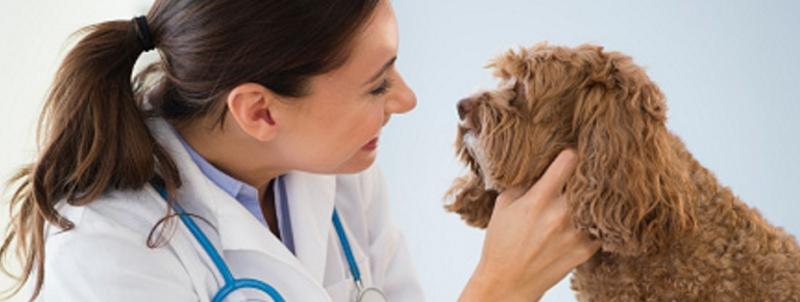 veterinarios_800x302_acf_cropped